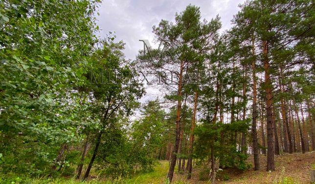 Продажа участка 1,5 га лес коттеджный городок Козин Конча-Заспа