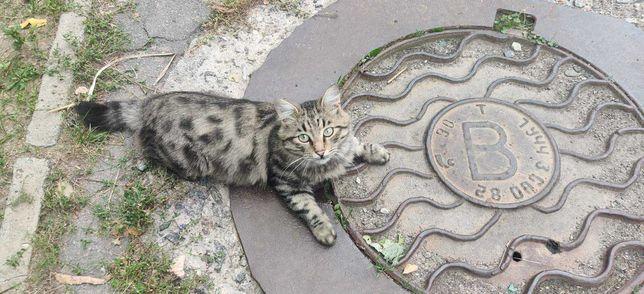 Кито потерял котика