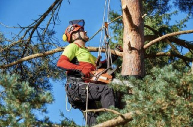 Профессиональный спил деревьев, 100% аккуратно!