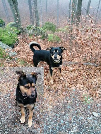 02.04.2021r Zaginął Pies Bruno i suczka Spina