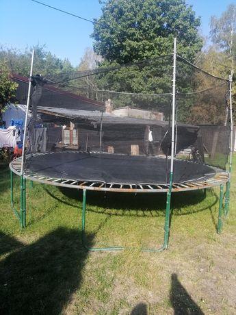 Trampolina trampolina