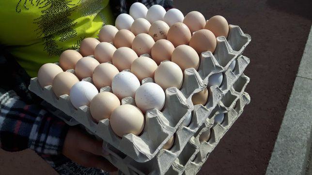 Jajka Wiejskie Świeże Z DOSTAWĄ Będzin i okolice
