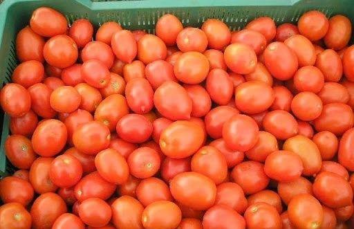 Pomidory gruntowe LIMA