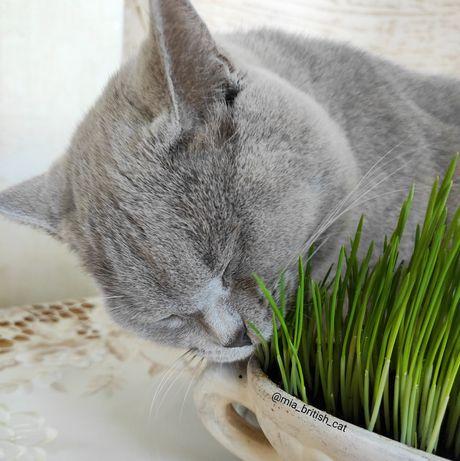 Wyrośnięty owies/ żyto ekologiczne dla kotów, królików/innych gryzoni