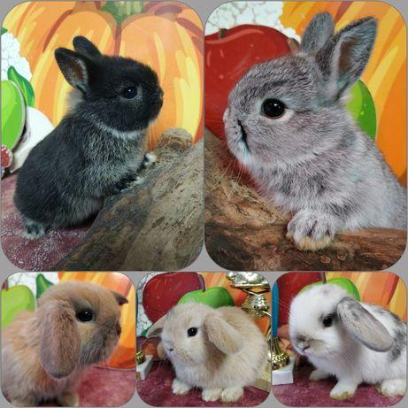 Карликовые крольчата BAMBY