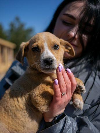 Собака Рой, 4 месяца мальчик, пёс, собачка