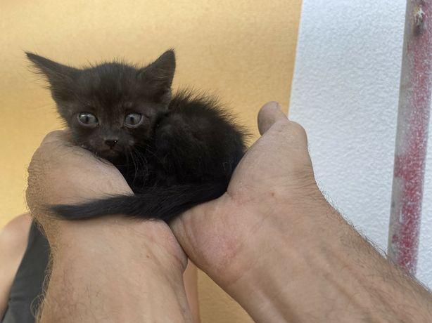 Маленький котенок (девочка)