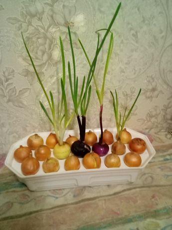 Вазон, контейнер, горшок ёмкость для выращивания лука