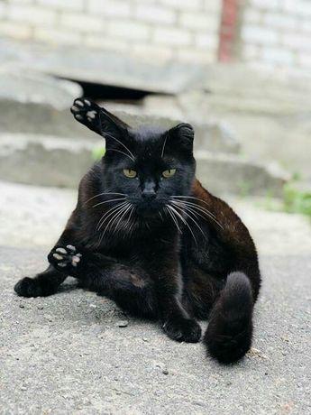 Отдам черную кошку, 1,5 года, стерилизована