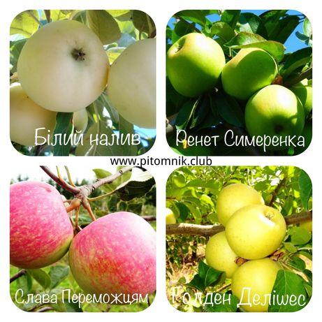 Саженцы яблони 2х летка - питомник. Яблоня карликовая и полукарликовая