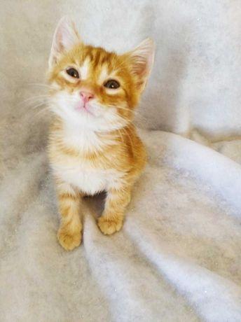 Рыжий котик в хорошие руки
