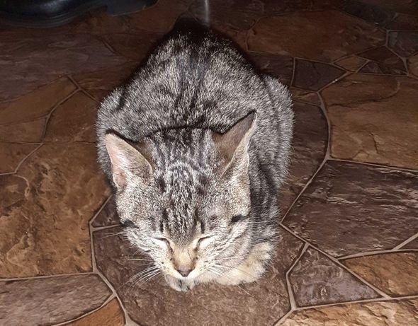 Młoda kotka pilnie szuka domu