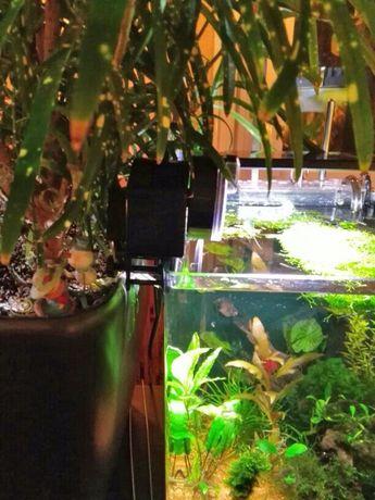Для автоматического кормления рыбок в аквариуме автокормушка