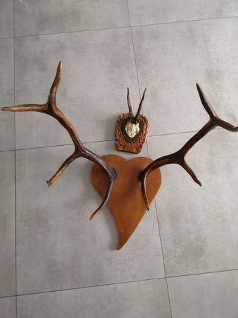 Poroże jelenia dekoracyjne