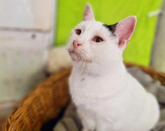 Ласковая кошечка Милка очень хочет жить в семье, в тепле, любви