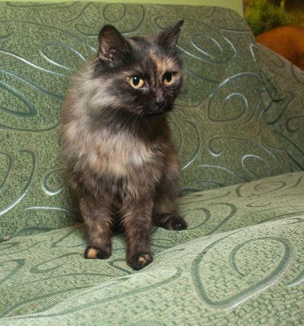 Отдам ласковую кошку в частный дом, пушистая, черепаховая