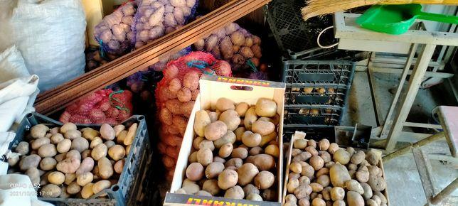 Картопля продам .