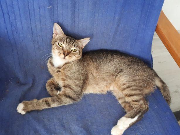 Młoda kotka (Rebelka) szuka domu