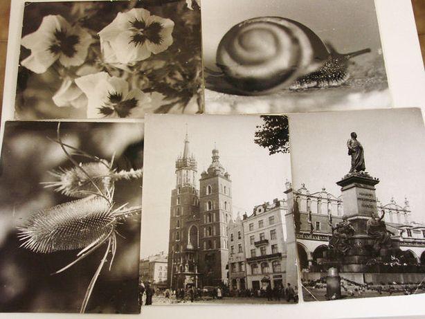 Stare zdjęcia Kraków i inne 5szt. praca z rok 1959