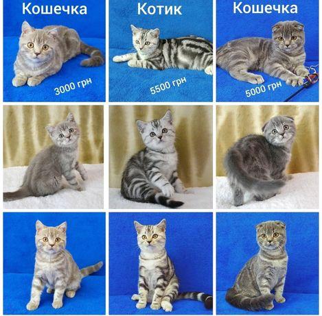 Мр.аморные 1шотландские котята