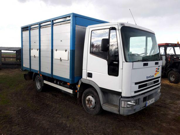 Transport żywca, bydła, krowy, jałówki SKUP