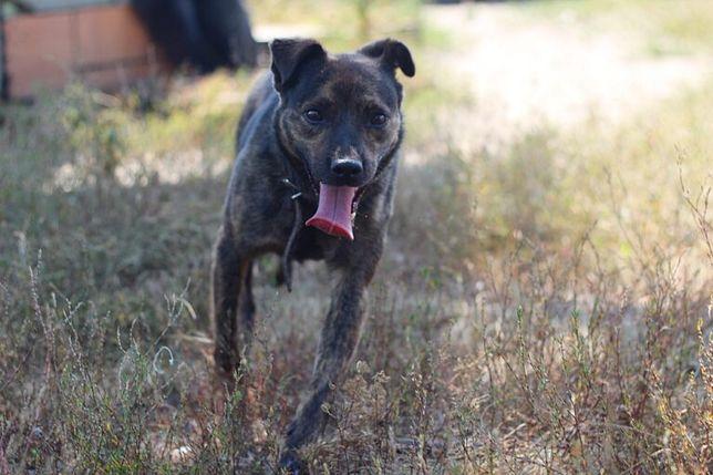 Billy- uroczy pies do adopcji