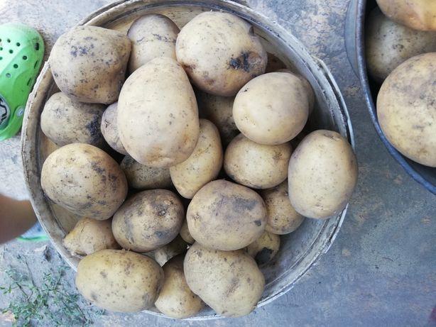 Продам картоплю на зиму і на посадку