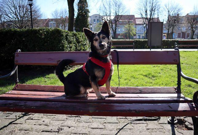 Ułożony pies szuka domu po śmierci właściciela
