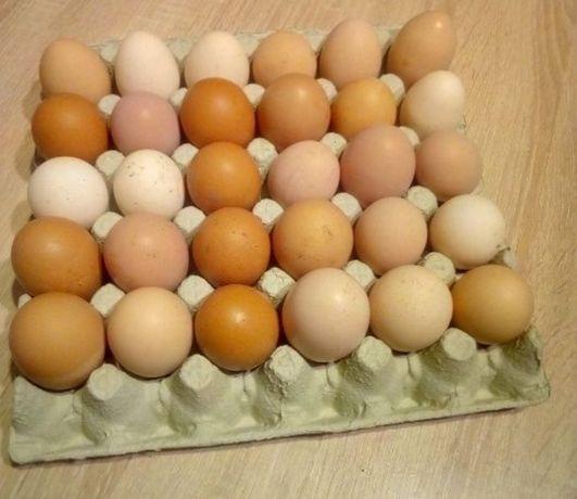 Jajka wiejskie z  własnej produkcji