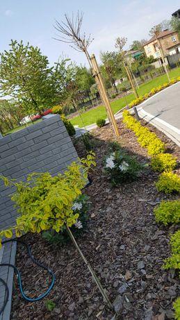 Usługi ogrodnicze wertykulacja przycinanie krzewów grabienie koszenie