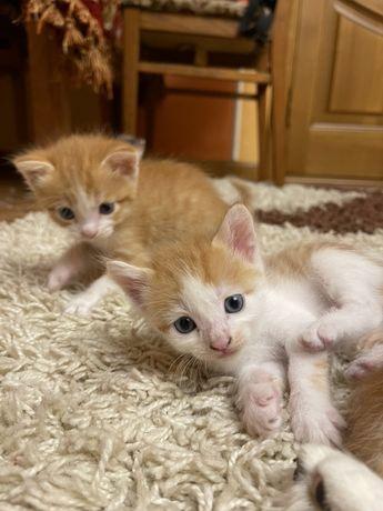Срочно!Бесплатно!Котёнок,кот,кошка,котята.Подарю.
