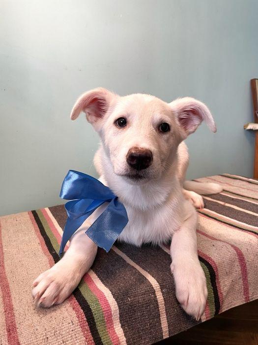 Отдаем щеночка в хоршие руки(щенок,щенки,собака) Одесса - изображение 1