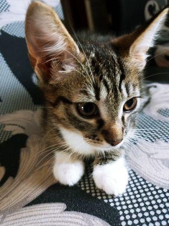 Oddam małą kotkę w dobre ręce