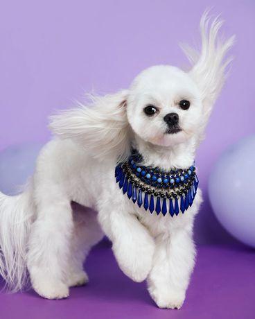 Grooming salon / pielęgnacja psów / psi fryzjer