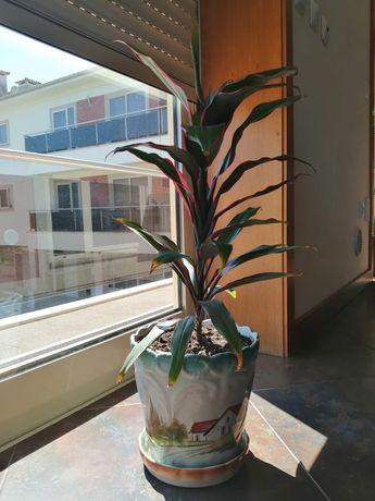 Planta Biológica Natural