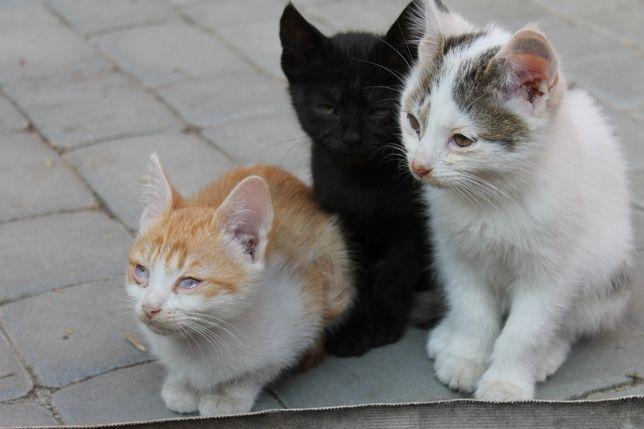 Милые котята ищут любящего человека