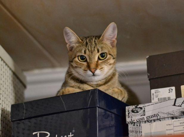 кішечка Маруся 8м