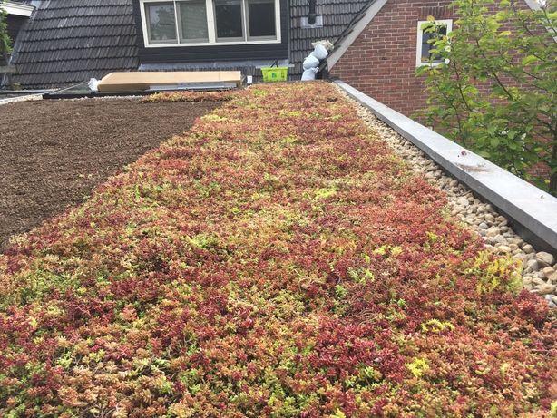 Coberturas verdes - Sedum e Sempervivum