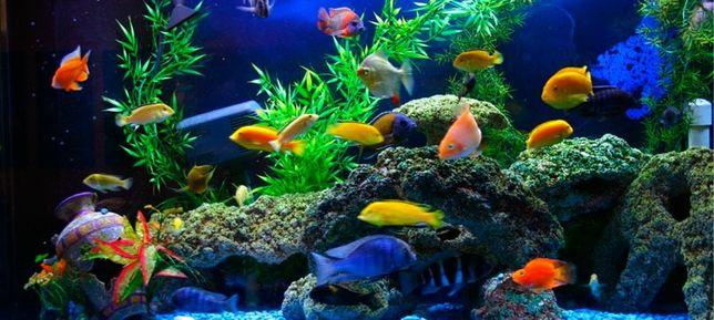 Аренда под аквариумистику
