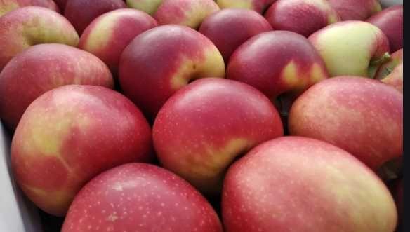 Promocja jabłko Gala 10kg+2kg gratis  darmowa wysyłka  od sadownika