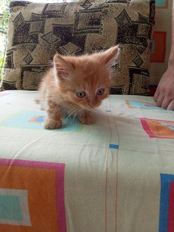 Котёнок даром,мальчик.