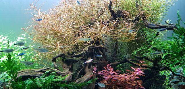Pack de vários tipos Plantas Aquário água doce