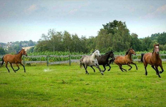 Wolny boks Stajnia Mustang Głębowice k Osieka boksy hotel koń