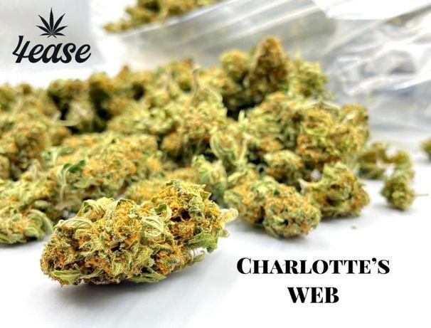 Susz konopny CBD Charlotte's Web 100g