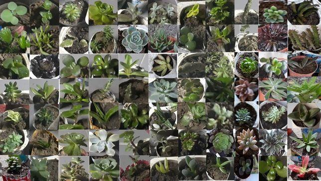 catos e suculentas de 77 espécies diferentes