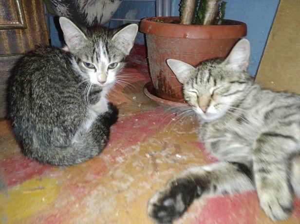 Отдам в хорошие руки кошку и котёнка СРОЧНО