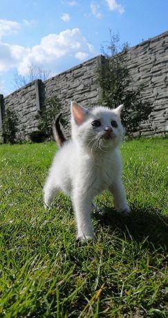 Oddam kotkę w dobre ręce