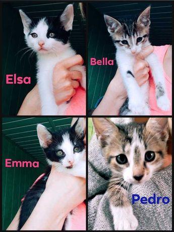 Śliczne Kotki Gotowe do Adopcji