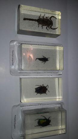 Комахи деагостіні