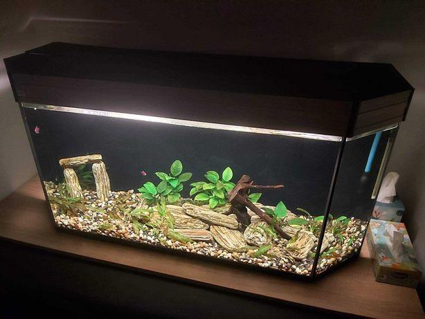 Akwarium 250l z calym osprzetem